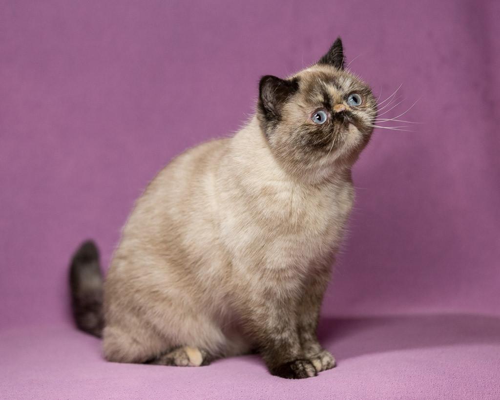 Penelope Of Stellarosa